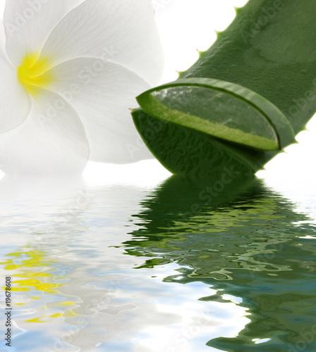 Aloe Vera Fleur Blanche Frangipanier Fond Blanc Reflets Stock Photo