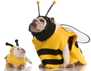 mother and daughter bulldogs dressed up like bees