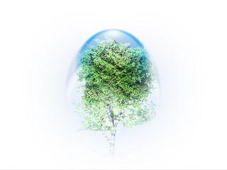l'arbre préservé