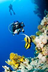 Türaufkleber Tauchen Plongeuse et photo sous marine, Mer Rouge, Egypte