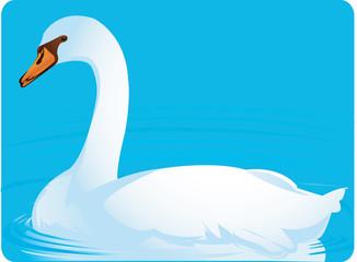 Illustration of a swan