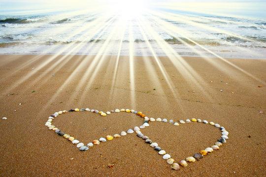 Seashell hearts