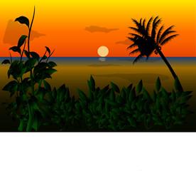 Sunset natural View