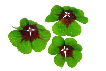 Glücksklee - four leafed clover 26