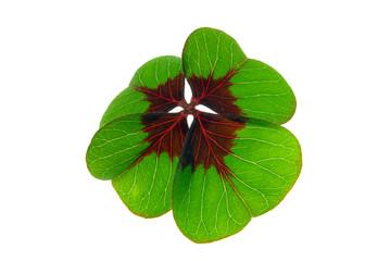 Glücksklee - four leafed clover 29