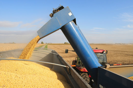 Harvesting soybeans and loading truck to go to maket