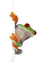 Photo sur Plexiglas Grenouille Crazy Frog!
