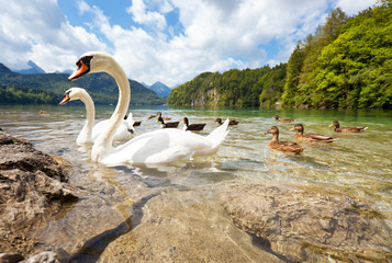 Wall Mural - Alps lake with birds