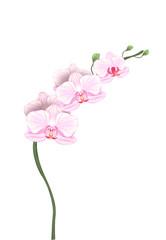 orchidée détourée