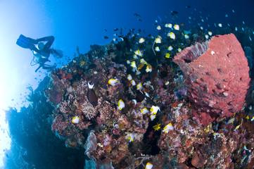 Plongeuse et récif, photo sous marine, Lembeh, Indonésie