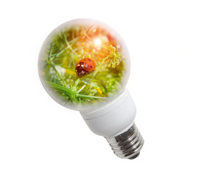 Clean energy, a light bulb with grass, and lady-bug.