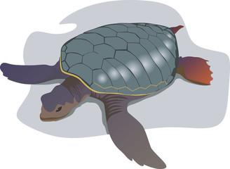A tortoise crawling