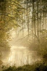 Keuken foto achterwand Bos in mist Autumn forest with morning mist floating on the river