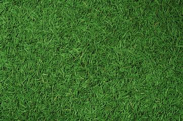 Conifer needles background