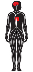 Blood Circulation System