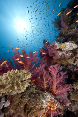 Ocean,fish and coral