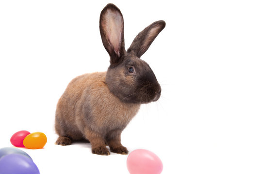 Easter bunny - second generation