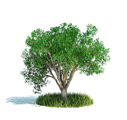 Tree isolated on white growing on small grass patch