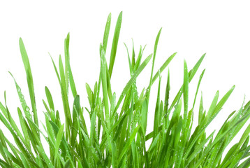 Fresh green grass with waterdrops