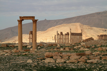 Columns of Palmyra