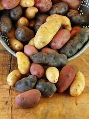 Variety of Fingerling Potatoes in Colander