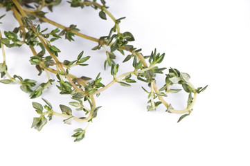 Fresh leafs of thyme herbs on a white background