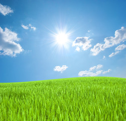 Meadow with a young green grass and the blue sky with the sun