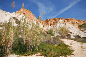 reed,red cliffs and blue sky (Algarve,Portugal)