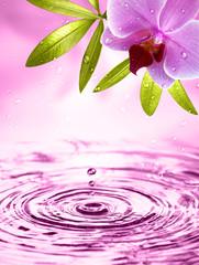 Obraz Wellness Motiv mit Orchidee - fototapety do salonu