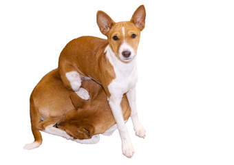 Puppy comfortably sitting on adult