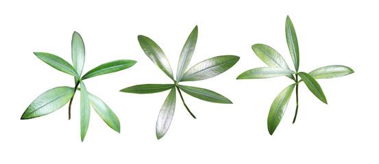 Freigestellte Bläter von Pflanzen