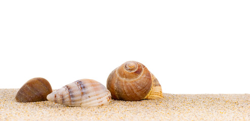 image de coquillages de mer posés sur le sable à la plage