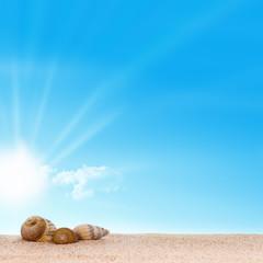 image plage sable et coquillages - fond ciel bleu et soleil