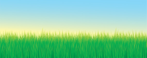 Colorful grass vector background banner