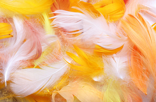 Colored feathers