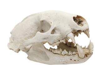 dog skull cutout