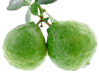 fruits condiment citrus hystrix, combava, agrume, fond blanc