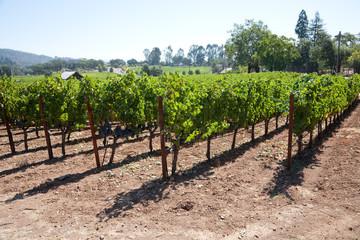 Weinanbaugebiet Nappa USA