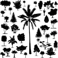 Beautiful Transparent Trees Vectors
