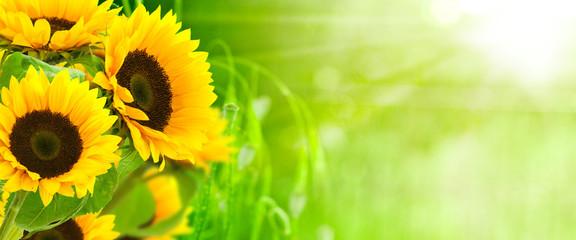 Autocollant pour porte Orange nature et énergie - fleurs de tournesols sur fond vert