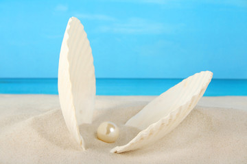 Clam containing a pearl washed ashore on the beach
