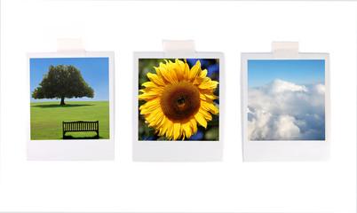 Polaroid photos