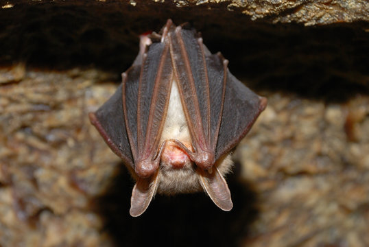 bat holding on a wall