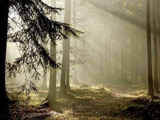 Photo sur Aluminium Bestsellers Coniferous forest at the end of autumn