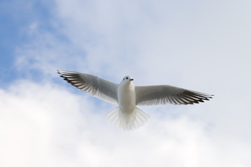 Flying seagull on the sky background