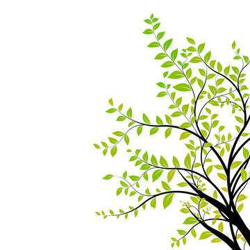 tree branch vector - green and natural floral design element