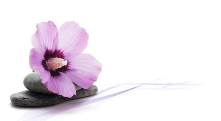 image décoration zen, relaxation fleur rose, décor fond blanc