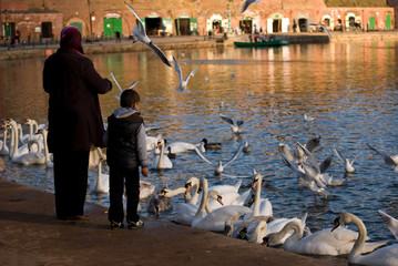 Bird Feeding, Exeter Quay, Devon
