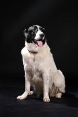 Portrait Of The Dog On black