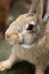 young curious bunny